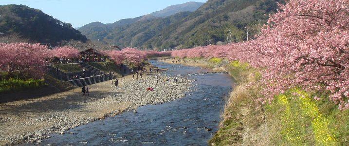 Kawazu03301_2